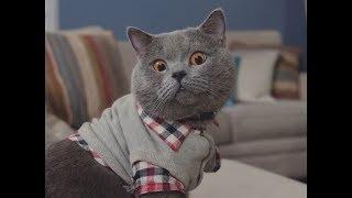 Aaron's Animals New Video Compilation || FunnyVines