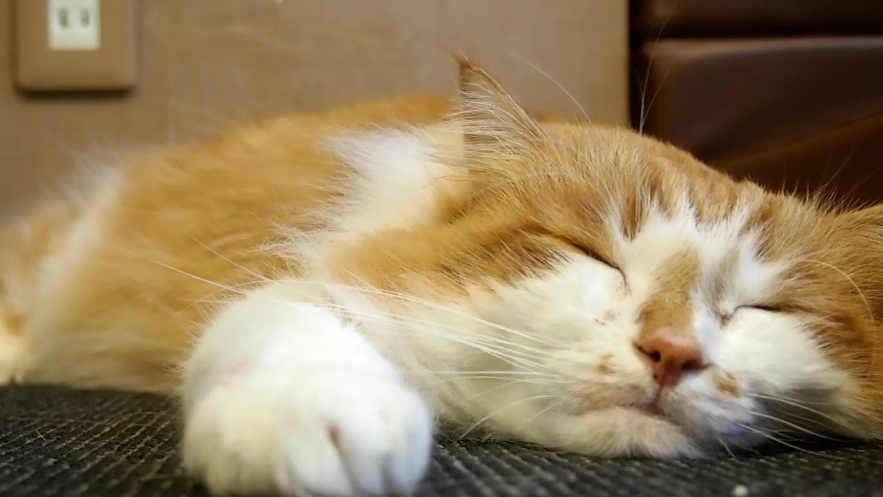 How to enjoy a cat cafe :  A healing space for cat lovers