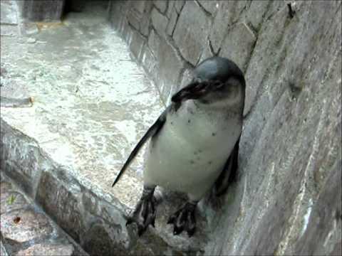 江戸川区自然動物園生後4ヶ月~16ヶ月のちくわ