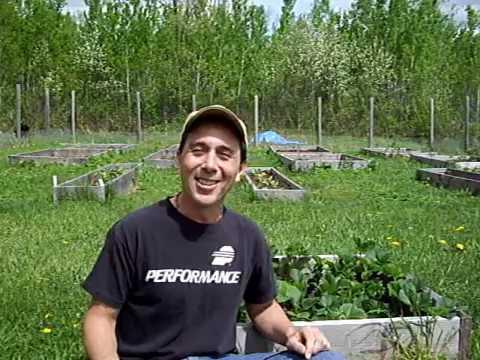 E-Z Compost Tea (Simplest method on earth)