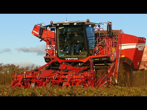 Grimme Ventor 4150 Big Potato Harvester Working Hard in The Field | Potato Season 18' | DK Agri