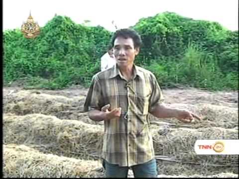 ครบมุมข่าว ตอน เพาะเห็ดฟาง อาชีพเปลี่ยนลูกจ้างเป็นเถ้าแก่ที่สระไม้แดง 25 08 2011
