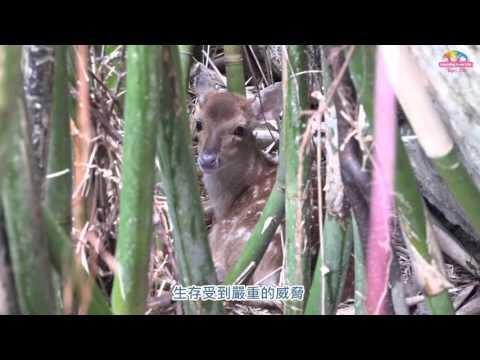 台灣-臺北市立動物園-EP 153 動物園聖誕超吸睛 淺山物種齊報佳音