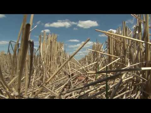 Grazing Stubbles and Water Use Efficiency
