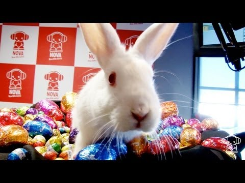 Interview: The Easter Bunny
