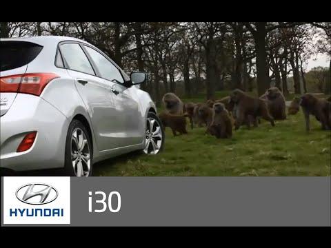 Кто кого? Hyundai i30 vs Бабуины