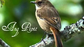 Ang Pipit (Filipino Folk Song)