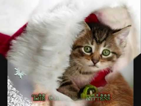 It's Christmas! Cute Kittens & Puppies
