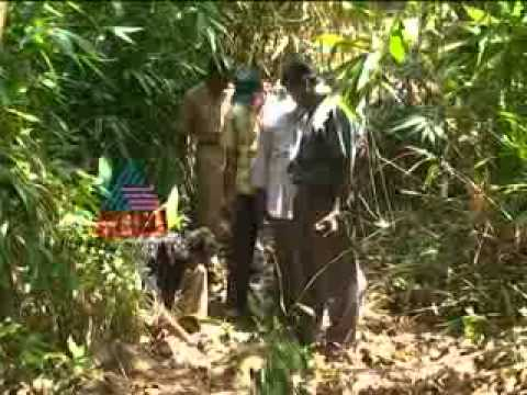 Census of Tiger in Kerala Forest