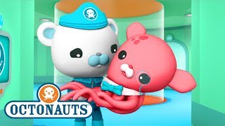 Octonauts - Close Encounters   Ocean Adventures   Cartoons for Kids   Underwater Sea Education