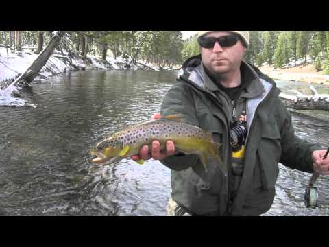 Fly Fishing Madison River Nov. 11