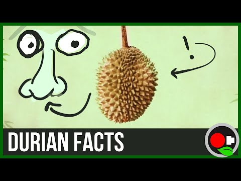 Durian (King of Fruits) - the Chemistry of the Smell