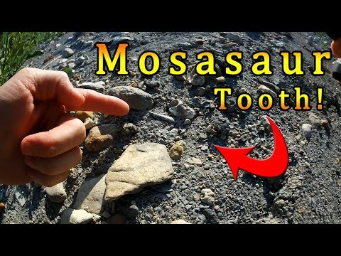 Equinox 800 Lake Trip & Impromptu Fossil Hunt - Mosasaur Tooth!