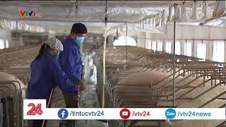 Chưa phát hiện ổ dịch tả lợn ở trang trại lớn | VTV24