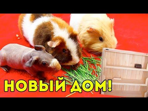 Строим Новый Дом для Морских Свинок / SvinkiShow