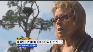 Drone caught flying over eagle's nest in North Fort Myers