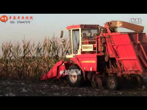 China harvest in rural of Hebei Province