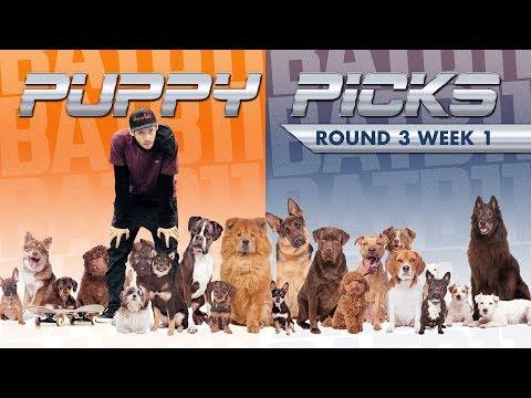 BATB 11 | Puppy Picks - Round 3: Week 1