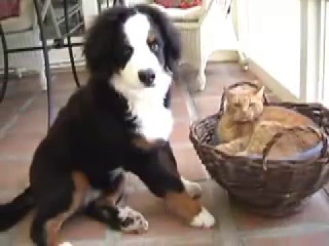 Puppy And Cat Make Friends