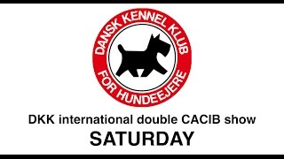 DKK - Double CACIB show - Saturday