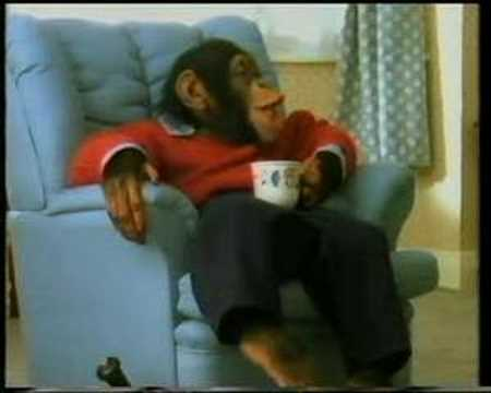 funny monkeys drinking