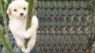 Will you SURVIVE or DIE LAUGHING? - Super FUNNY ANIMAL compilation
