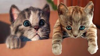 Play Fun Pet Care Kids Game - Little Kitten My Favorite Cat