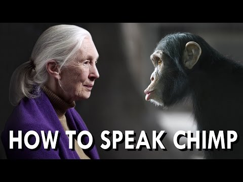 Talking Chimp With Jane Goodall