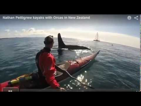 Nathan Pettigrew kayaks with Orcas in New Zealand
