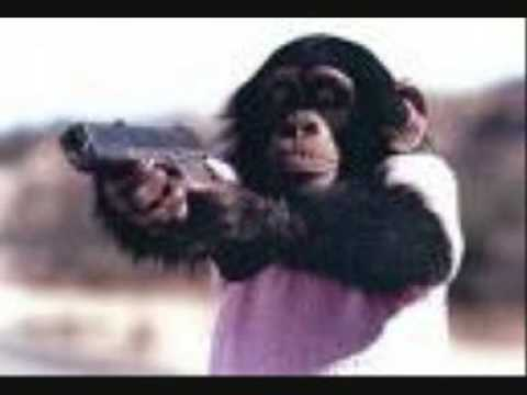 attacked by chimp. Chimp Attack - Fox News Feb