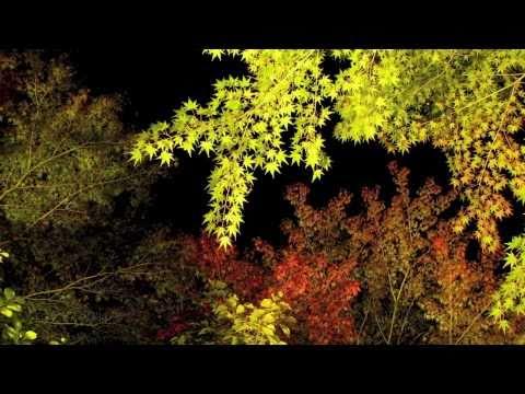 Autumn Leaves 有馬温泉 紅葉ライトアップ 2010.11/05