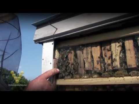 Видеокурс Пчеловодство - видео