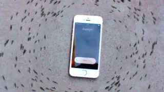 Die Ameisen und das Smarttelefon
