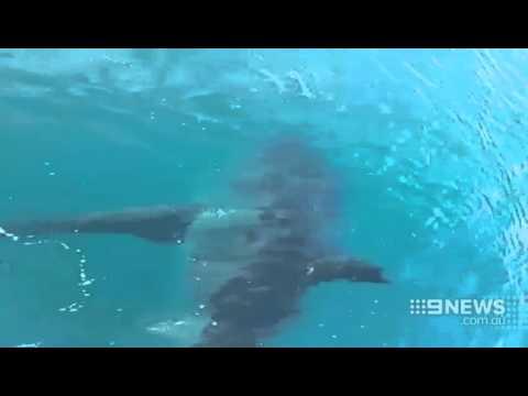 Shark Encounter | 9 News Perth