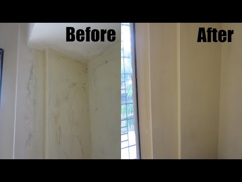 How to clean black mold
