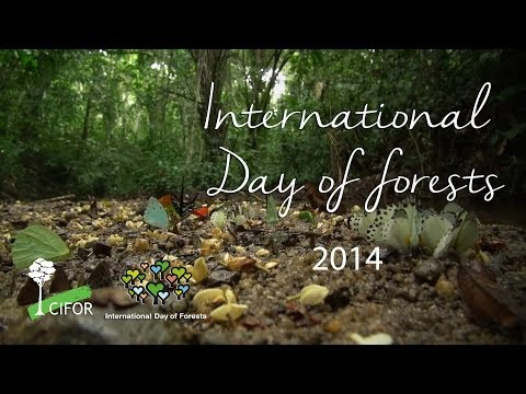 International Day of Forests 2014
