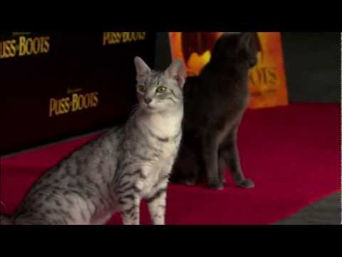 Puss In Boots - Cat Premiere