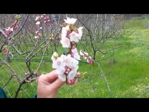 Apricot Garden - Stop It