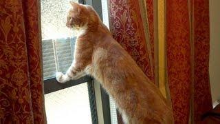 猫がやたら外を気にするので見てみると... - the cat finds the stray cat -