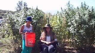 Hemp Bucket Challenge to Truth_Ashley Weber 2014