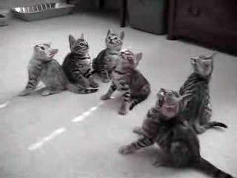funny bengal kittens Video