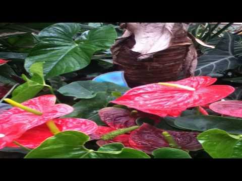 The living rainforest Newbury Berkshire