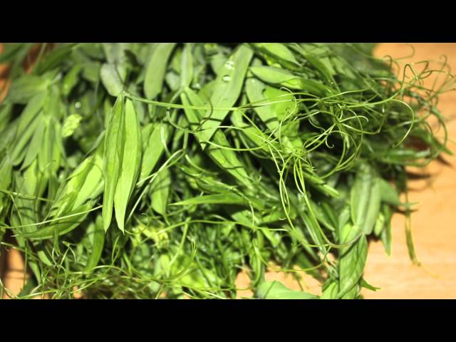 Wild Edibles With Sergei Boutenko: Wild Sweet Pea