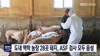 도내 역학 농가 28곳 돼지,ASF 검사 결과 음성