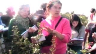 Naranjo trifoliado