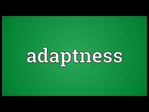 Header of Adaptness