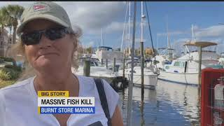 Dead fish floating near Burnt Store Marina blamed on red tide