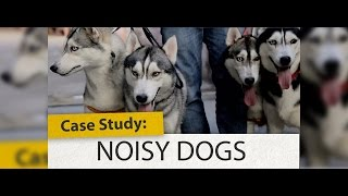Case Study: Noisy Dogs | Woofcam
