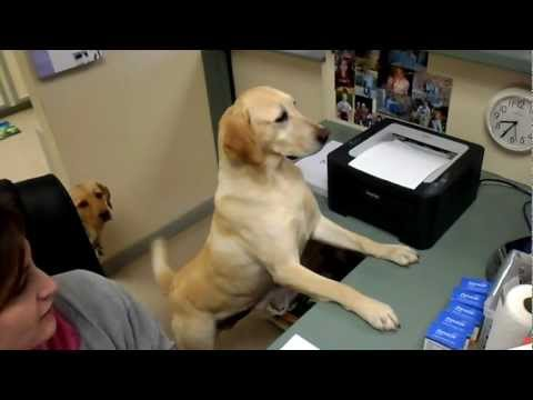 Dog gives receipt.