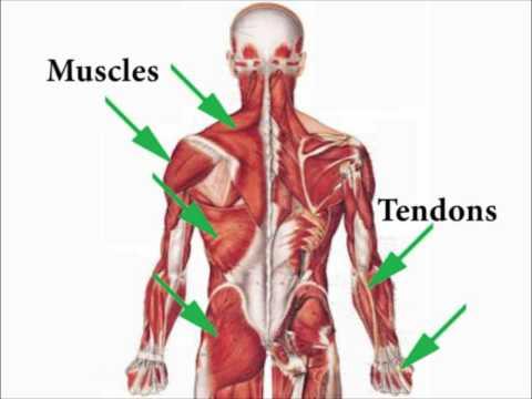 Sports Injuries Self-Treatment Nature Of Injuries 1